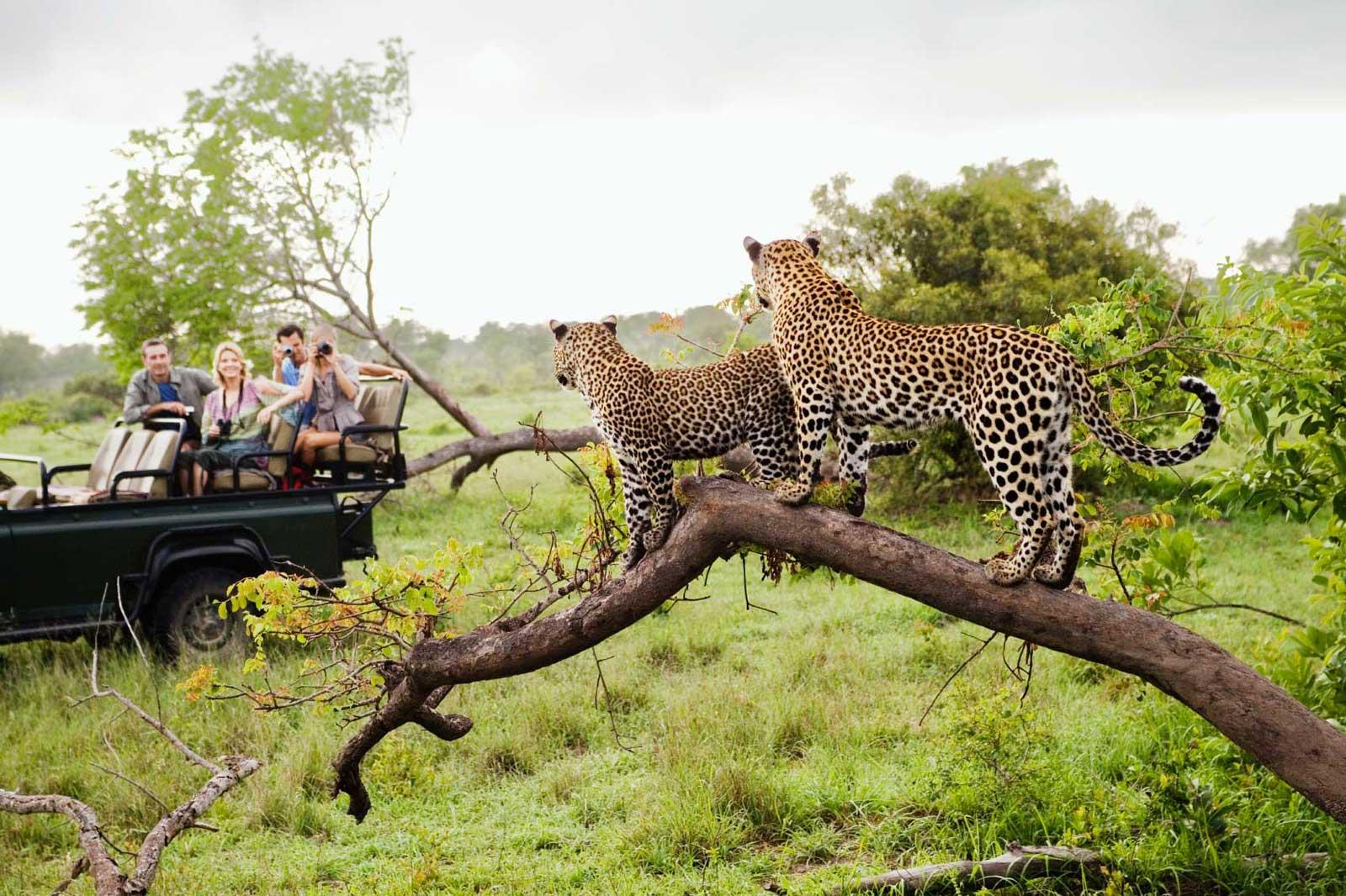 Kruger National Park in Africa 22