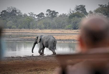 afrika-ecco-safari-experience1.jpg