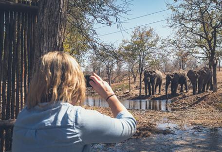 1-safari-experience-elephants.jpg