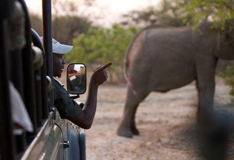456-ezulwini-billys-lodge-safari-experience6.jpg
