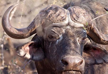 456-ezulwini-billys-lodge-safari-experience7.jpg