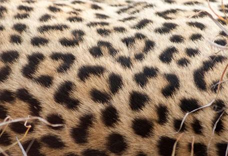 456-ezulwini-billys-lodge-safari-experience8.jpg