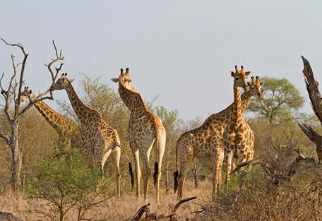 456-ezulwini-billys-lodge-safari-experience10.jpg