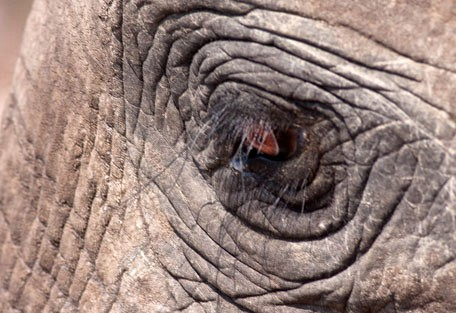 456-ezulwini-billys-lodge-safari-experience9.jpg