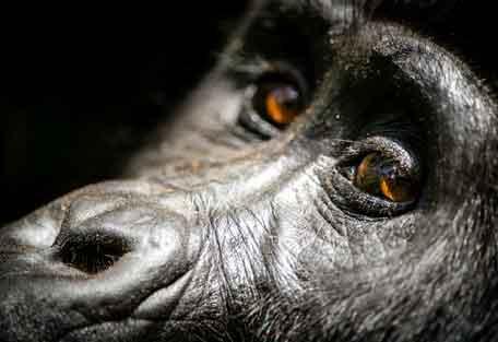 456-gorilla-safari-experience8.jpg