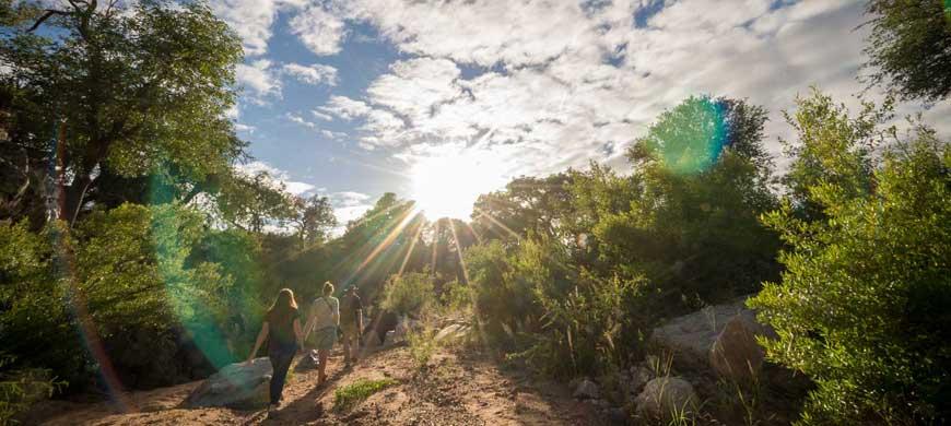 Ivory-wilderness-walking-wide1.jpg