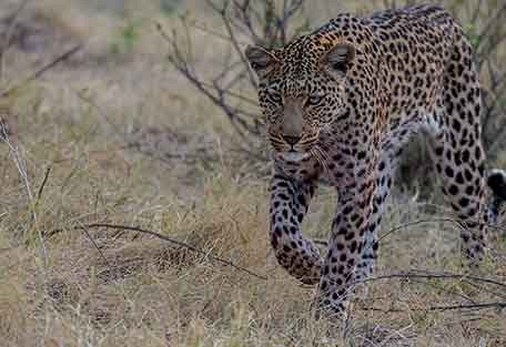 456-john-chase-safaris-experience3.jpg
