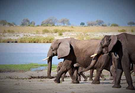 456-john-chase-safaris-experience5.jpg
