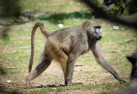 456-john-chase-safaris-experience7.jpg