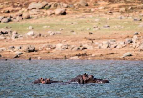 456-klaserie-river-safari-experience5.jpg