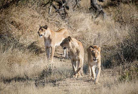 456-Nambu-Safari-Experience4.jpg