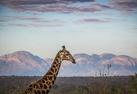 456-Nambu-Safari-Experience5.jpg