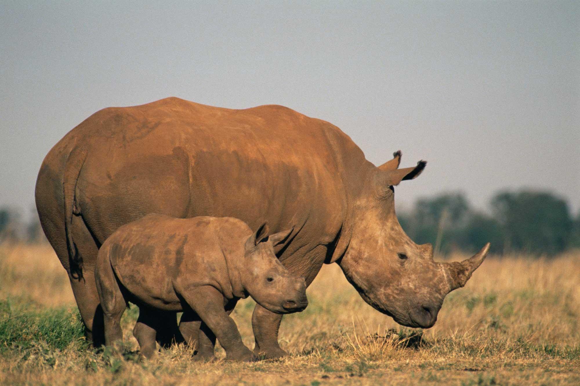 Фото про животных африки 3