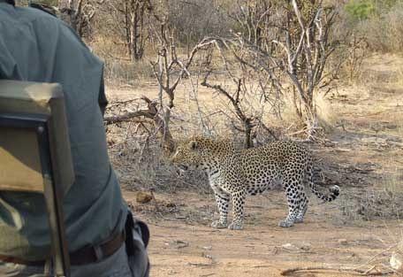 456-nThambo-Tree-Camp-safari-experience2.jpg