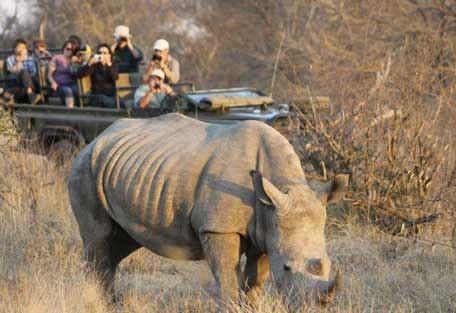 456-nThambo-Tree-Camp-safari-experience1.jpg