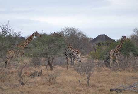 456-nThambo-Tree-Camp-safari-experience6.jpg