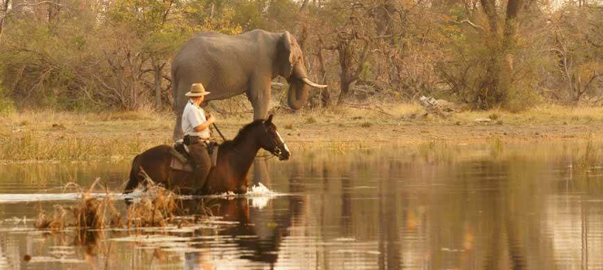 Motswiri-horses-wide1.jpg