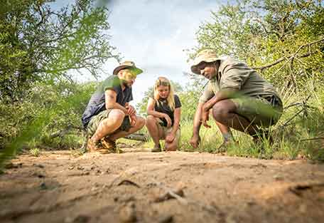 1a-456-safari.jpg