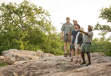 1d-456-walking-safari.jpg