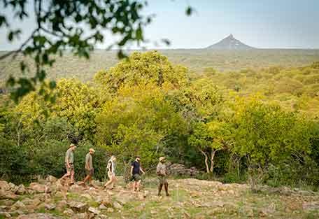 1g-456-safari-walking.jpg