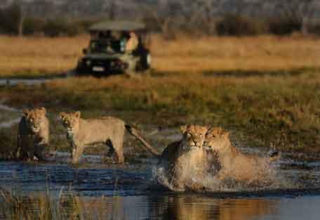 camp-savuti-safari-4.jpg