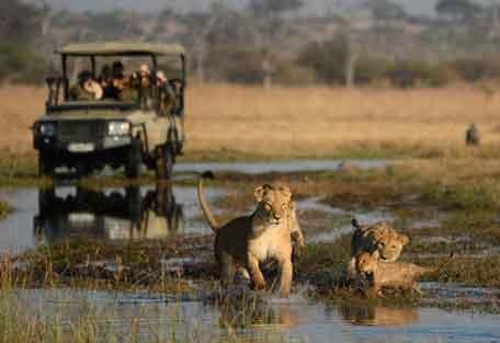 camp-savuti-safari-8.jpg