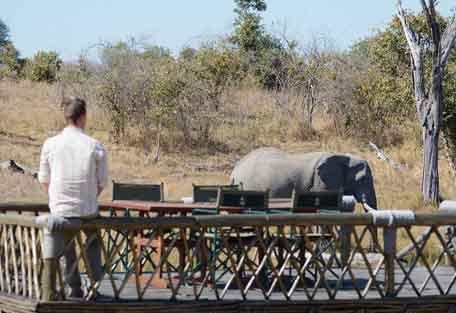 camp-savuti-safari-9.jpg