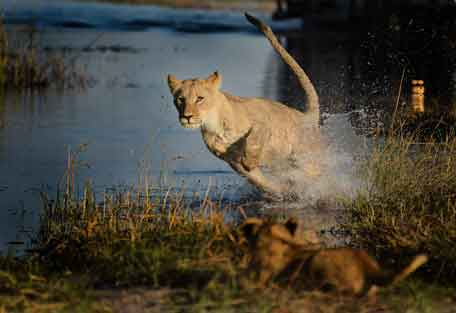 camp-savuti-safari-1.jpg