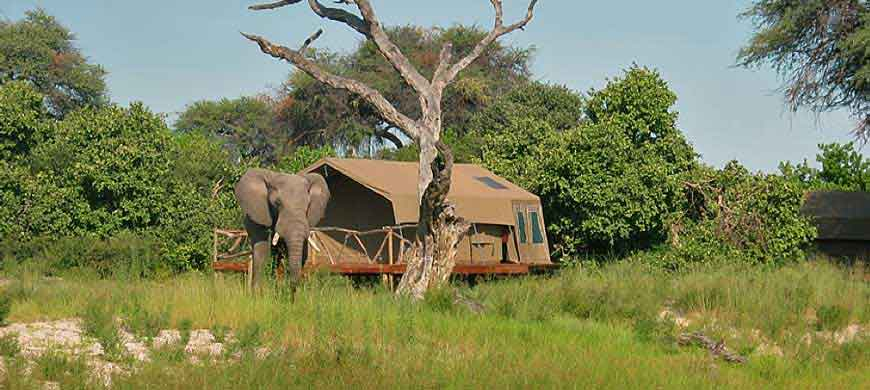 camp-savuti-wide1.jpg