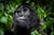 gorilla-safari-lodge-cover1.jpg