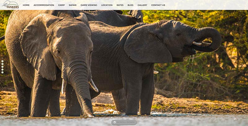 Tuskers Bush Camp Website