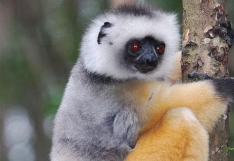 456_madagascar_lemur.jpg