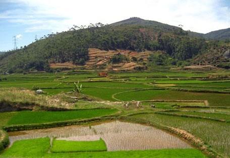 456_antananarivo_fields.jpg