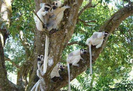 456_east_lemurs.jpg
