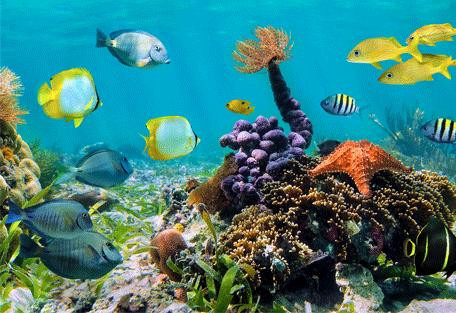 456g_maldives.jpg