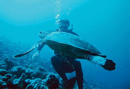 456r_constance-moofushi-resort_scuba-diving.jpg