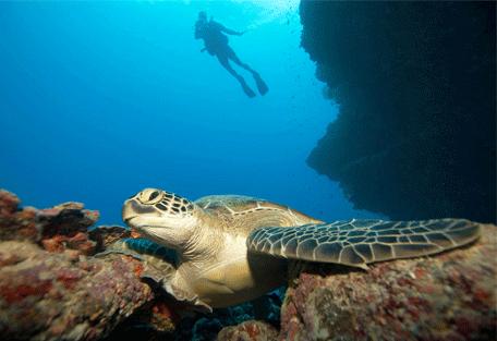 456o_kuredu-island-resort_turtles.jpg