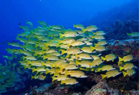 456r_meeru-island-resort_diving-fish.jpg