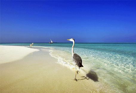 456o_velassaru-beach_bird.jpg