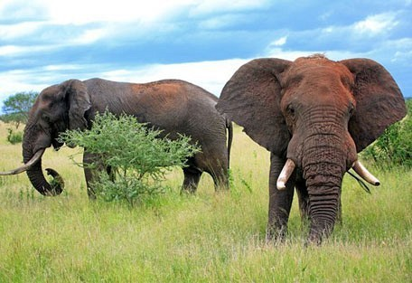 Image result for gorongosa national park