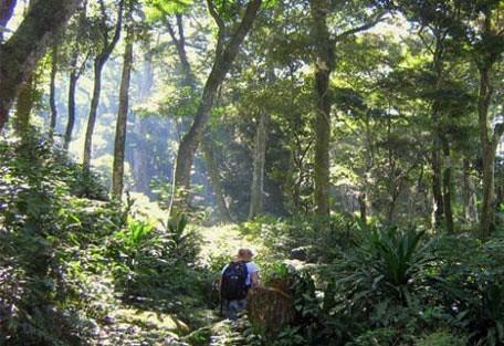 456_gorongosa_hike.jpg