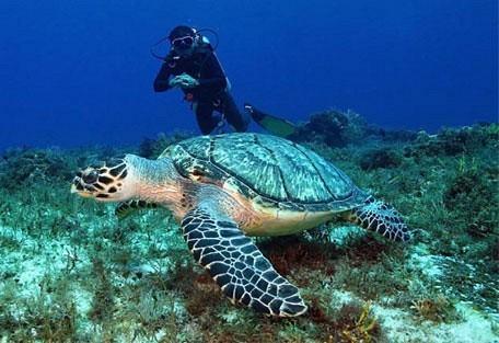 456_pontadouro_diving.jpg