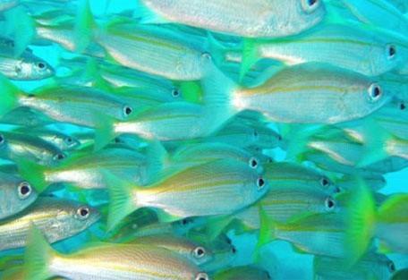 456_pontadouro_fish.jpg