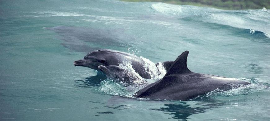 870_pontadouro_dolphins.jpg