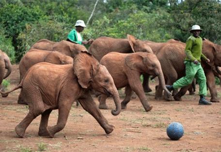 456g_hogmead_elephant-orphanage.jpg