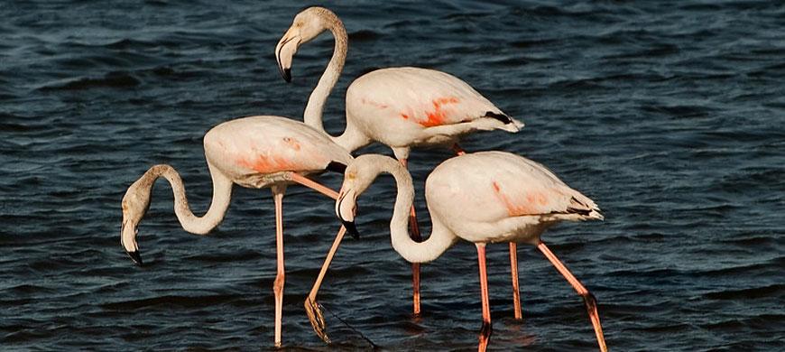 870_luderitznest_flamingos.jpg