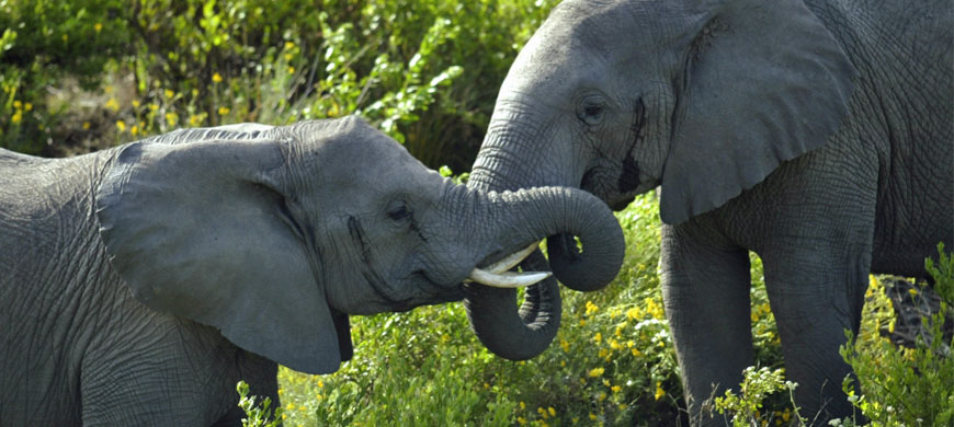 870_grgamelodge_elephants.jpg