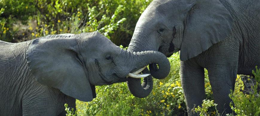 870_grgamelodge_elephants.jpg