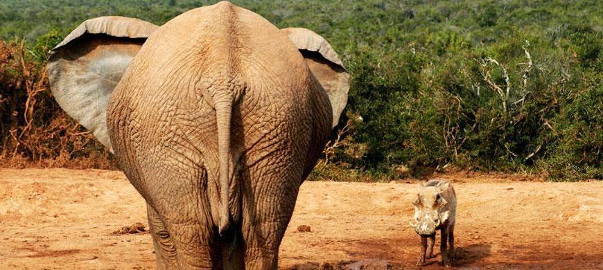 870_kwantu_elephant.jpg