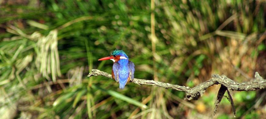 870_bushlodge_kingfisher.jpg